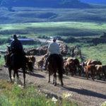 Mein Ranchstay in den USA: Ein Arbeitsplatz mit grenzenloser Freiheit Hainer's Erfahrungsbericht von der Farmarbeit