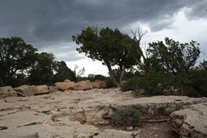 Bäume, dunkler Himmel, kleine Felsen