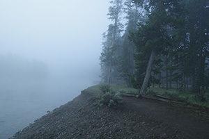 Wald, daneben ein See, nebelig