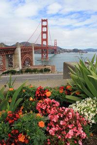 Im Vordergrund stehen Blumen und Pflanzen, im Hintergrund ist die Golden Gate Bridge