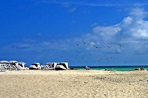 strand, im Hintergrund blauer himmel und Vögel