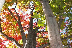 bunte Bäume, von unten hoch fotografiert