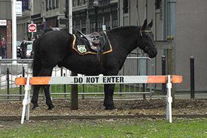 Polizei-Pferd im Boston City Garden hinter Absperrung